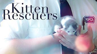 Kitten Rescuers: Season 1